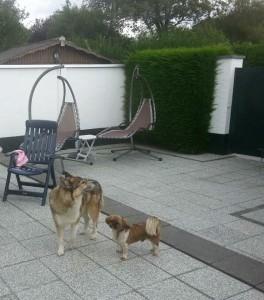 Alf & Lucky