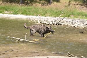 Chico hat den See im Naturschutzgebiet entdeckt