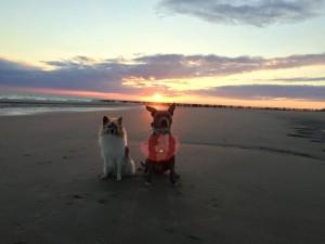 Finn und Fine genießen den Sonnenuntergang
