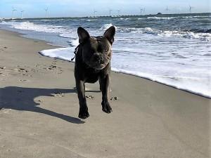 Harley freut sich über den Strand