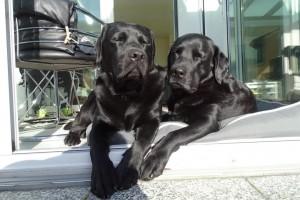 Luca und Taro beim Sonnenbaden