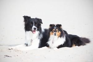 Lya &Heidi ein Traumpaar