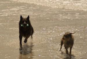 Max & Irok wieder am Strand