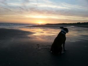 Diesen Sonnenuntergang muß Hund gesehen haben